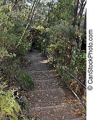 Morton National Park hiking - hiking path at the Morton ...