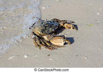 morze, krab, shore.
