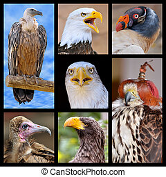 Mosaic photos birds of prey