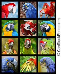 Twelve mosaic photos of portrait of parrots