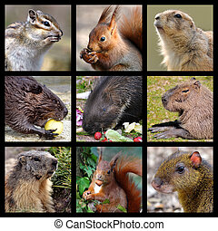 Mosaic photos of rodents
