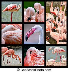 mosaico, fotografias, de, flamingos