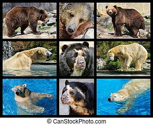 mosaico, fotografias, de, ursos
