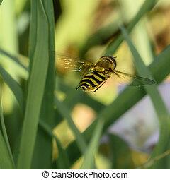 mosca, babbling, verde, encima de cierre, vegetación