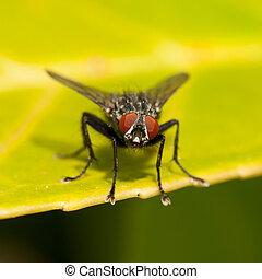 mosca, casa, comune
