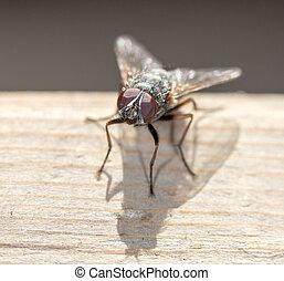 mosca, casa, fine