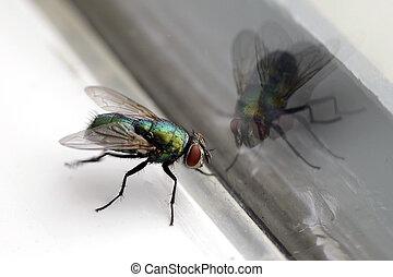 mosca, casa, &, vetro