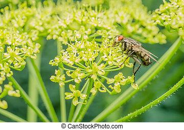 mosca, comune