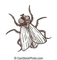 mosca, esboço, isolado, ilustração, inseto, vetorial, monocromático