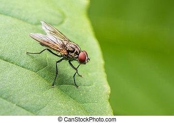 mosca, foglia