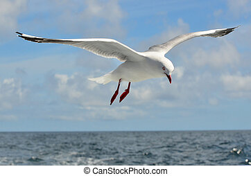 mosca, gaivota, acima, mar