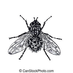 mosca, gráfico, fresco