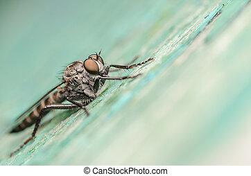 mosca, ladro