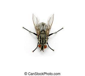 mosca, ligado, um, branca