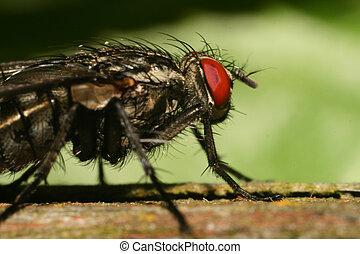 mosca, macro, extremo