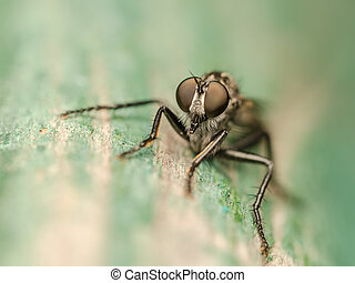 mosca, macro, ladro