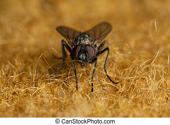 mosca, material, macio