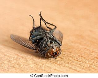 mosca, morto
