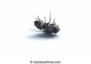 mosca, muerto