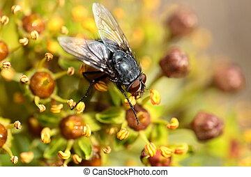 mosca, musca, naturale, casa, sopra, mosca domestica, fondo...