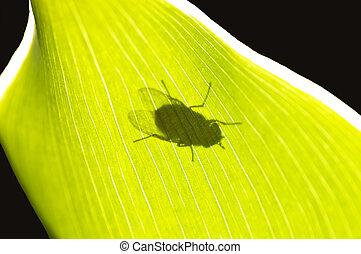 mosca, parte posterior - luz
