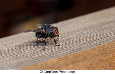mosca, primo piano