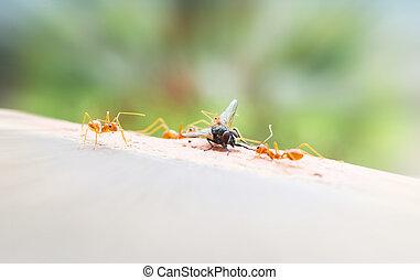 mosca, rodear, hormiga, foodchain, casa, sacrificio, flyhouse, hormigas, equipo, malo, muerto, suerte, o, más flojo, criatura
