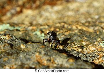 mosca, su., gigante, mangiare, larval, cicala, chiudere, ladro