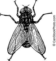 mosca, vendimia, estilo, grabado