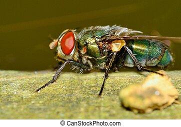 mosca, verde, bottiglia