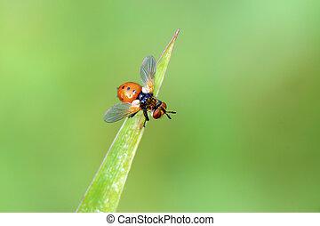 moscas, insectos, en, el, hojas verdes