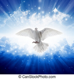 mosche, cielo, santo, luce, spirito, luminoso, shines, cieli, uccello
