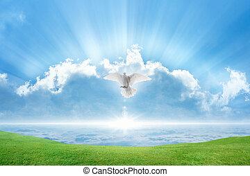 mosche, spirito santo, colomba bianca, uccello, cieli