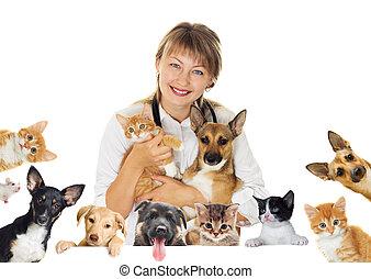 mosolygós, kutya, állatot megvizsgál, Macska