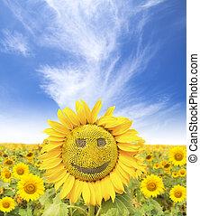 mosolyog arc, közül, napraforgó, -ban, nyár időmérés
