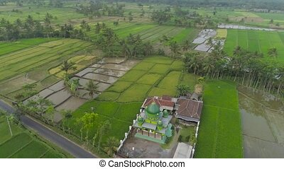 mosque among rice fields Java Indonesia - mosque in middle...