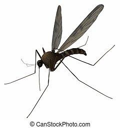 Mosquito - 3D Animal