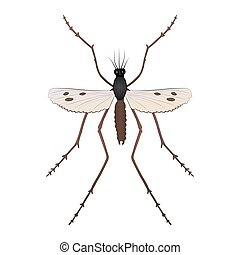 Mosquito color illustration isolated on white background.