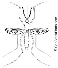 Mosquito Insect Sketch including all parts