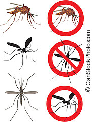 mosquito, mosquitoes (culex) - mosquito bite, dangerous...