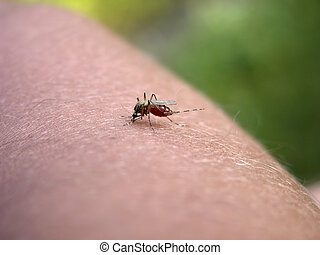 Mosquito on my hand. Part 4.