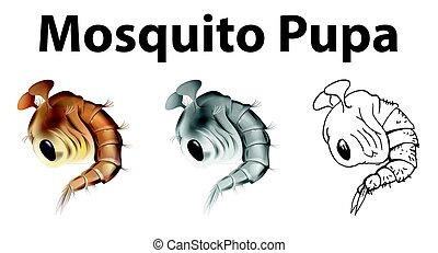 Mosquito pupa in three different drawing styles