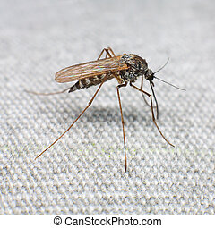 Mosquito trying to bite through a matter