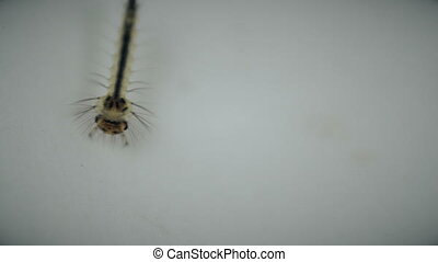 mosquitoes larvae in dirty water and young is born disease...