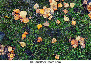 Moss and autumn leaves in the forest