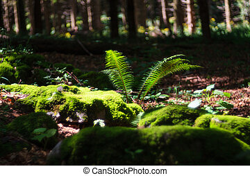 Moss and fence in the woodland - Moss on rocks and fence in...