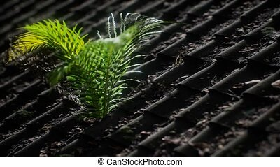 moss and fern on old roof