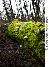Moss and mushrooms on rotting tree