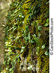 moss and plants growing on the side of a rock in the oxley world heritage rainforest