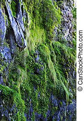 moss and plants growing on the cliff face and rocks